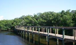 Sentiero costiero attraverso le mangrovie fotografia stock