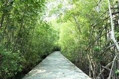 Sentiero costiero attraverso un campo della mangrovia fotografia stock