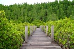 Sentiero costiero della natura attraverso la mangrovia stimolata verde intenso o foresta indiana della mangrovia della provincia  fotografia stock