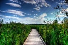 Sentiero costiero di legno in canne alte fotografie stock