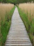 Sentiero costiero di legno in canne alte Immagine Stock Libera da Diritti
