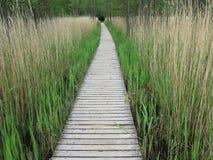 Sentiero costiero di legno in canne alte Immagini Stock Libere da Diritti