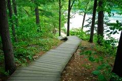 Sentiero costiero in foresta immagine stock