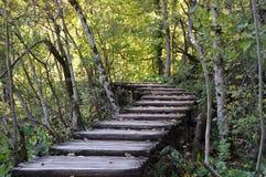 Sentiero costiero in foresta, autunno Fotografia Stock