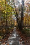 Sentiero costiero nell'acadia di autunno immagini stock libere da diritti