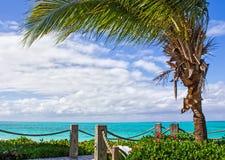 Sentiero costiero sporgentesi della palma Fotografia Stock Libera da Diritti