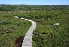 Sentiero costiero sulla montagna di Gros Morne Fotografia Stock Libera da Diritti