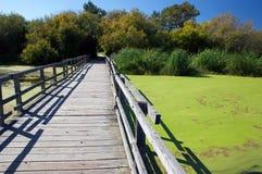 Sentiero costiero in un santuario della natura Immagine Stock