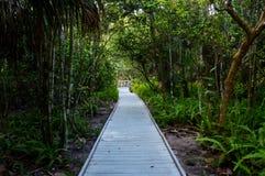 Sentiero didattico attraverso il legno fotografie stock
