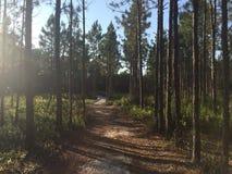 Sentiero didattico di Florida Immagine Stock