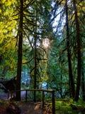Sentiero didattico nella foresta dell'Oregon fotografia stock