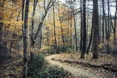 Sentiero didattico in Nord Carolina immagini stock libere da diritti