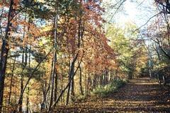 Sentiero didattico in Nord Carolina fotografie stock libere da diritti