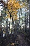 Sentiero didattico in Nord Carolina fotografia stock