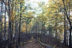 Sentiero didattico in Nord Carolina fotografia stock libera da diritti