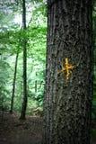 Sentiero didattico segnato con l'incrocio dell'oro Fotografia Stock