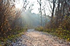 Sentiero forestale fotografia stock libera da diritti