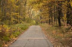Sentiero forestale Immagini Stock