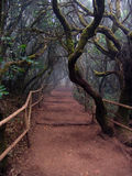 Sentiero forestale Fotografie Stock