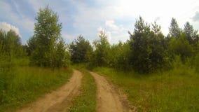 Sentiero forestale archivi video