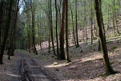 Sentiero forestale al Mak del KOH Immagini Stock