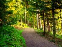 Sentiero forestale al Mak del KOH Immagine Stock