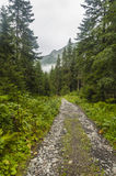 Sentiero forestale al Mak del KOH Fotografia Stock