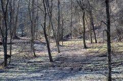Sentiero forestale al Mak del KOH immagini stock libere da diritti