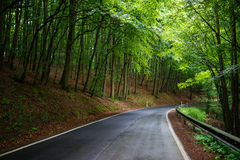 Sentiero forestale al Mak del KOH Fotografia Stock Libera da Diritti