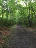 Sentiero forestale al Mak del KOH Immagine Stock Libera da Diritti