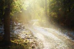 Sentiero forestale con neve Fotografia Stock