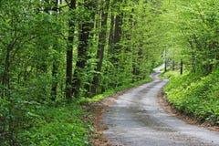 Sentiero forestale della primavera Fotografia Stock