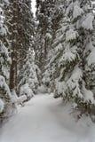 Sentiero forestale di inverno nel parco Synevir Immagini Stock Libere da Diritti