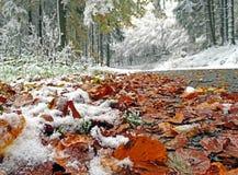 Sentiero forestale dopo la prima neve in autunno Immagini Stock