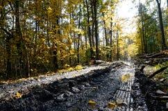 Sentiero forestale fangoso Fotografie Stock Libere da Diritti