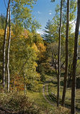 Sentiero forestale fra gli alti alberi Fotografia Stock Libera da Diritti