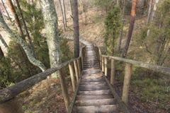 Sentiero forestale giù fotografie stock