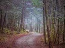 Sentiero forestale nel parco di Galloway, Scozia Fotografie Stock