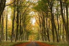 Sentiero forestale nella caduta Immagini Stock