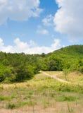 Sentiero forestale vuoto Fotografia Stock