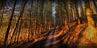 Sentiero nel bosco Immagine Stock Libera da Diritti
