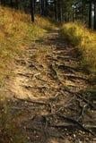Sentiero nel bosco Fotografia Stock
