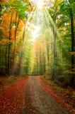 Sentiero nel bosco Fotografia Stock Libera da Diritti