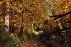 Sentiero nel bosco arrugginito dorato di autunno Immagine Stock Libera da Diritti
