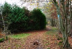 Sentiero nel bosco in autunno Immagine Stock