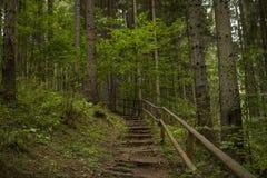 Sentiero nel bosco, Borsec Fotografia Stock