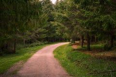 Sentiero nel bosco, Borsec Immagine Stock Libera da Diritti