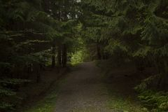 Sentiero nel bosco, Boserc Fotografia Stock