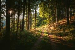 Sentiero nel bosco a cielo immagini stock