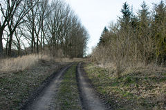 Sentiero nel bosco con gli alberi nudi nell'inverno danese, lunedì Fotografie Stock Libere da Diritti
